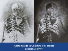 Anatomía de la columna y el tronco, Lección 14 del curso online Anatomía y Fisiología Aplicada