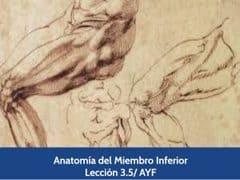 Anatomía del Miembro Inferior, Lección 15 del curso online Anatomía y Fisiología Aplicada.