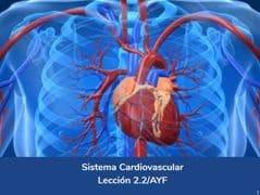 Sistema Cardiovascular, Lección 7 del curso online Anatomía y Fisiología Aplicada.
