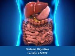 Sistema Digestivo, Lección 10 del curso online Anatomía y Fisiología Aplicada