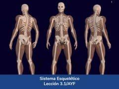 Sistema Esquelético, Lección 11 del curso online Anatomía y Fisiología Aplicada.
