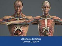 Sistema Linfático, Lección 8 del curso online Anatomía y Fisiología Aplicada.