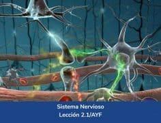 Sistema Nervioso, Lección 6 del curso online Anatomía y Fisiología Aplicada