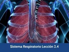 Sistema Respiratorio, Lección 9 del curso online Anatomía y Fisiología Aplicada.