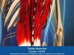 Tejido Muscular, Lección 5 del curso online Anatomía y Fisiología Aplicada.